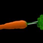 ¿Cómo cultivar zanahorias en casa? Secretos